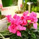 色鮮やかなお花。