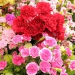 美しいお花