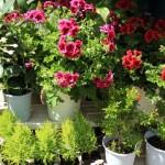 お店に並ぶ色鮮やかな花