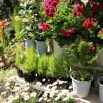 様々なお花が並んでいます。