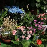 お店には様々な種類の花があります。