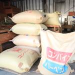 米の専門店ふのき