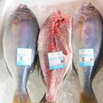 北山鮮魚店