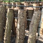 工房樫の木