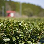 お茶の松山産業